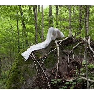 ForêtLabrador