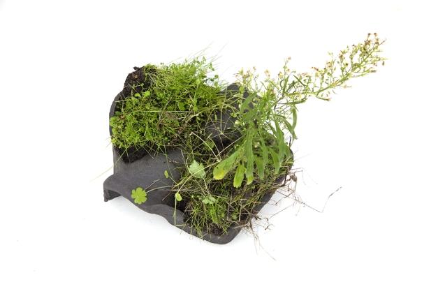 comme-l'herbe-pousse-2-bWebComm