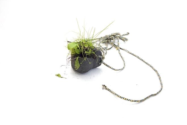 comme-l'herbe-pousse-3-bWebComm